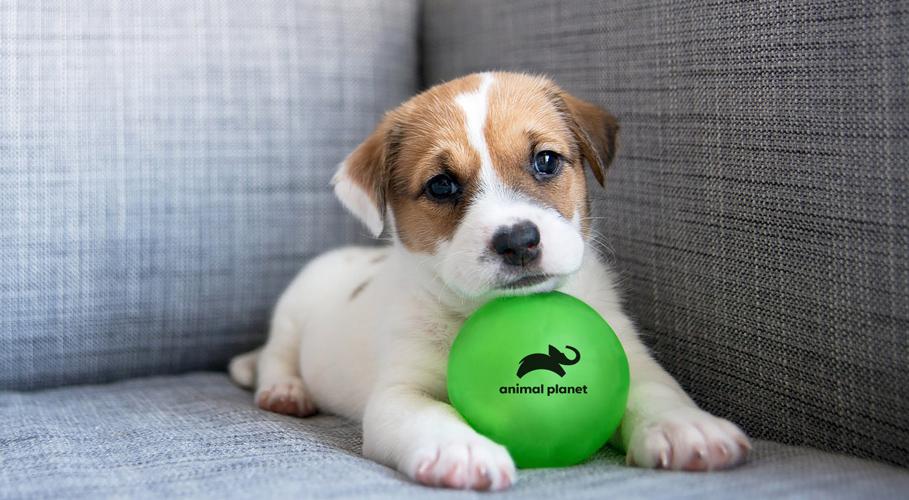 Animal Planet, ball