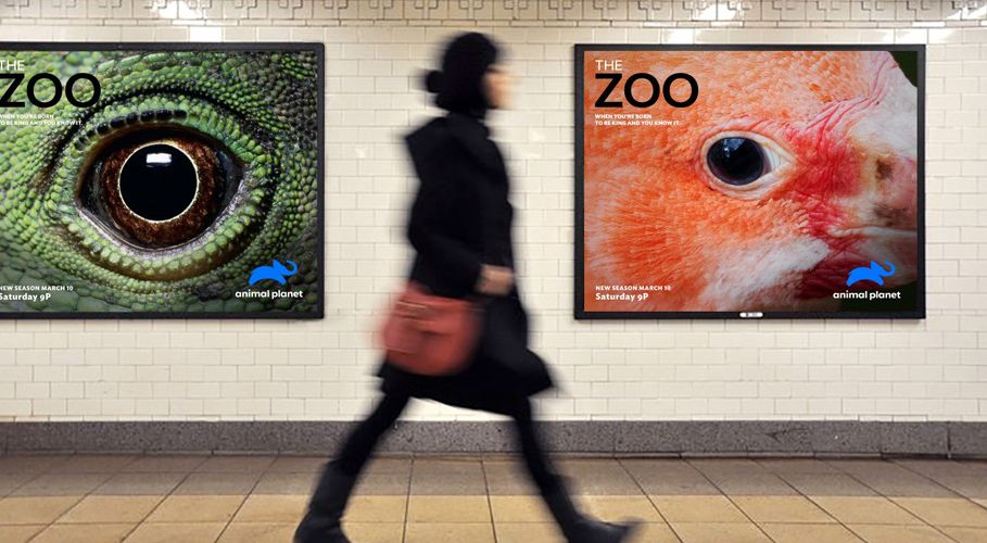 Animal Planet, posters